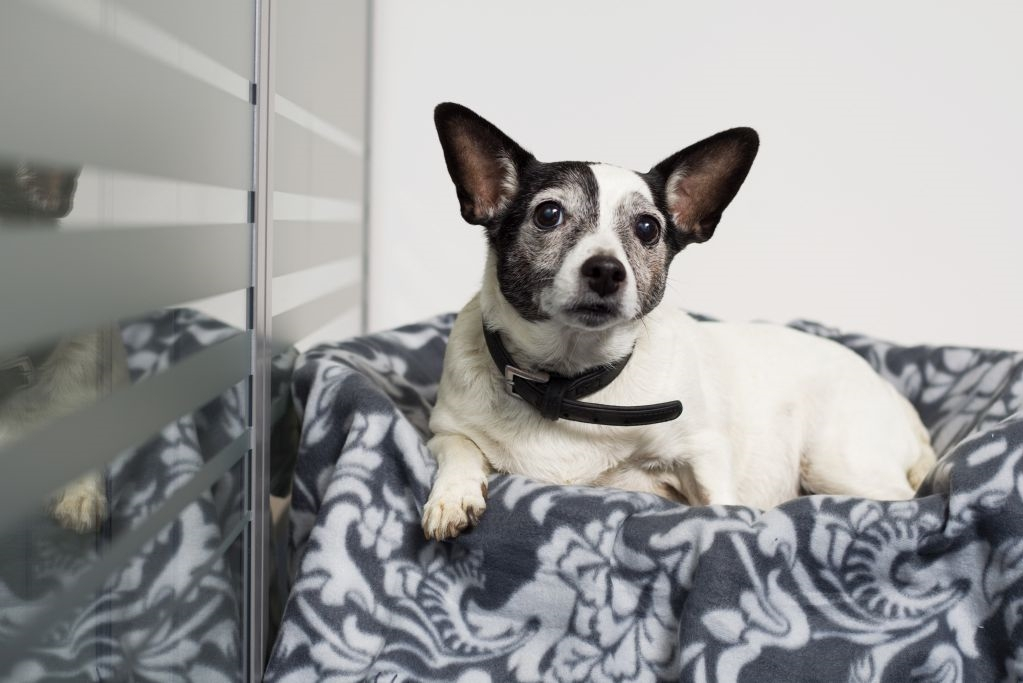 axa beverungen david l deke filialen team axa. Black Bedroom Furniture Sets. Home Design Ideas