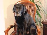 Name Agenturhund