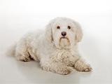 Gypsy Spezialist für Tierversicherungen