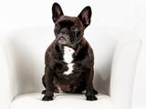 Pauline Agenturhund